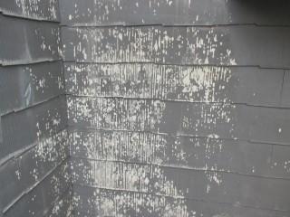 高圧洗浄後です。以前の塗膜が剥がれました。剥がれる塗膜は剥がさないと意味がありません。